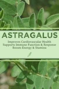 Absolute Astragalus Tea by Bravo Tea