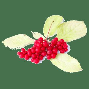 Absolute Schisandra Berry Tea by Bravo